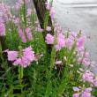 道の駅に咲いていた花☆