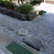 玄関の飛び石のまわりの植物撤去!
