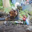木の根で水漏れ・・・千葉市