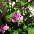 花を眺め安らぎをもとめ~~リフレッシュ・・・