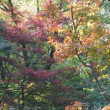 晩秋の新宿御苑(1)母と子の森 ラクショウ、シナアブラギリ、カンレンボク