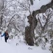 12/13 後生掛の「奇木の森を歩こう」下見