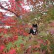 保科清水寺の紅葉