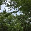 雲と樹々に癒されて・・・