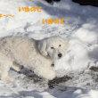 雪の日は カラスも喜ぶ狩人ゲーム