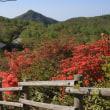 赤城山のつつじ2018(その3)