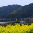 菜の花とN700系新幹線