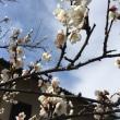 春の訪れ🌸