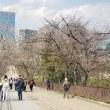 大阪の桜の開花宣言、27日も見送り。大阪城公園は蕾固し?