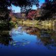 モネの庭の池3