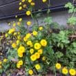 大事な大事な…花