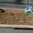 自宅のプランターにスナップえんどうを播種