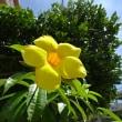 街で見かけた花々