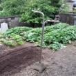 お盆の家庭菜園