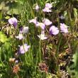 大山のふもとのお花