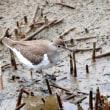 干潟の鳥たち