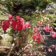 ニシキギ紅葉始まる