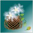 カラスウリの花と実