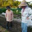 🎵 初夏の家庭菜園には、 畑友さんの助けを借りて、 することがいっぱい!
