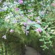 向島百花園・萩のトンネルを眺めに行ってきました。