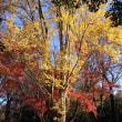 ご近所の保土ヶ谷公園と陣ケ下 渓谷公園で紅葉狩り