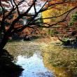 日比谷公園の紅葉・・3