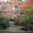 東近江市紅葉公園の紅葉