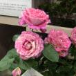 国際バラ展 in 西武ドーム