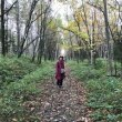 錦秋の北海道を訪ねて その2 然別湖畔の手つかずの自然にふれる