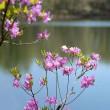 3388 池畔の花