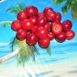 ヤシの木に赤い大きな実が沢山なりました。