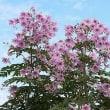 季節の花「木立ダリア」