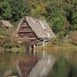 松尾池のカワセミ