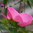 花と蝶&虫   目の保養タイムです❣️