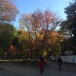 東京の紅葉