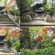 特集 神社巡りダイジェスト版(東京23区)in2018 V18L0702