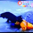 1/16 犬がようやく氷の厚いところについた 破棄だって