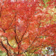 京都嵐山 天龍寺