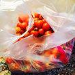 ミニトマト栽培の成果