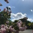 公園でみつけた春