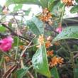 良い匂いの花が咲く