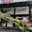 『雪景』 善福寺