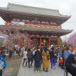 浅草寺の枝垂桜