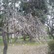 [レク]大宮公園梅まつり