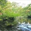 お洒落な街で心落ち着くひととき・根津美術館・2 ~庭園にて
