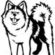 秋田犬って、、