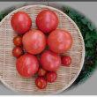 トマト消化週間