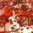 京都の秋、再び