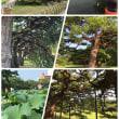 香川県  その5  栗林公園編
