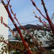 猫散歩・中島・球場外壁・八王子橋・水信・我が家と歩く
